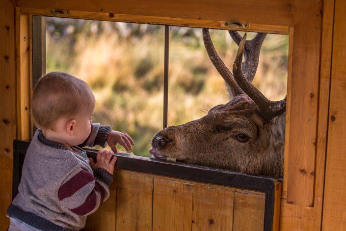 deer, child,